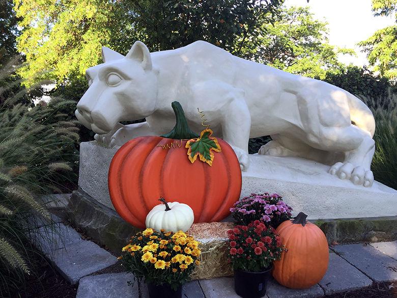 Fall Lion